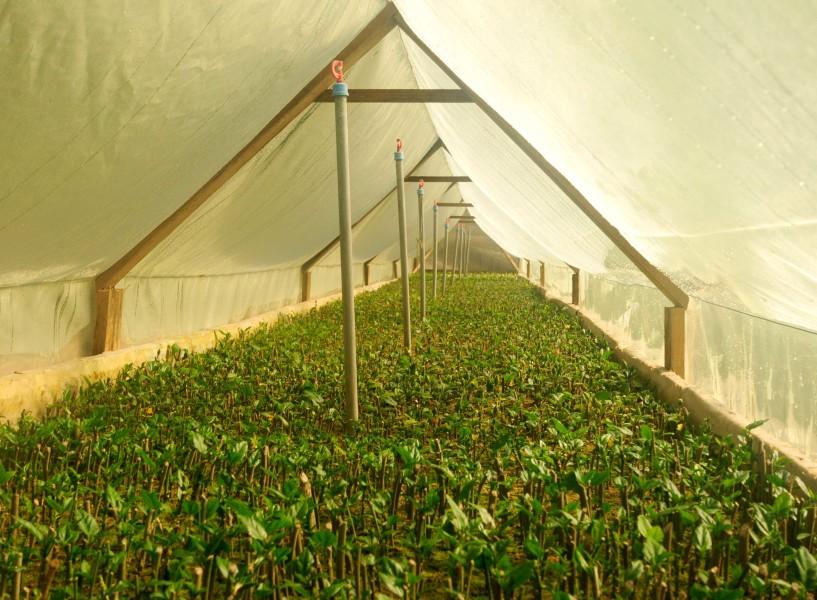 Area-de-propagacion-Vivero-Multiplant-Olmue