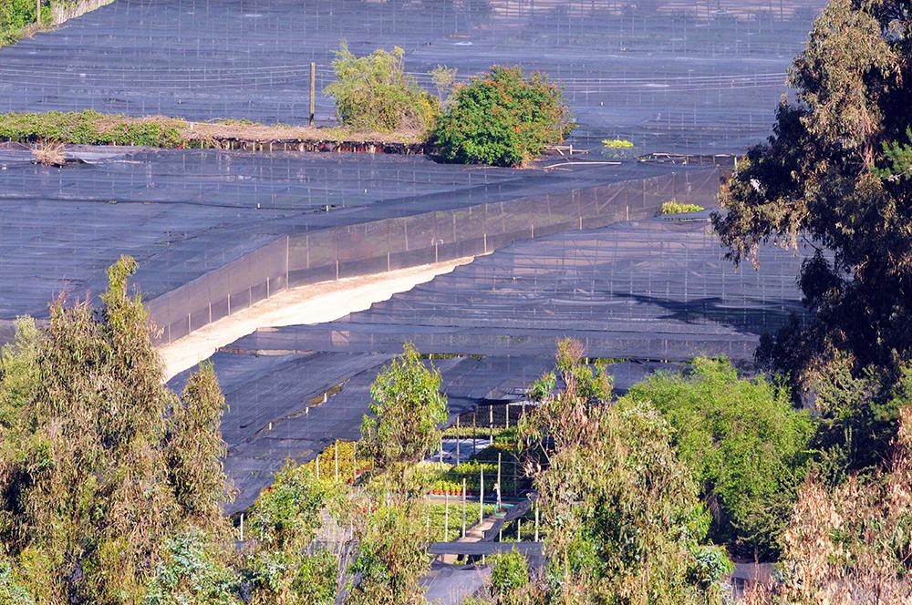 Areas-de-produccion-de-arbustos--vivero-Multiplant-Olmue