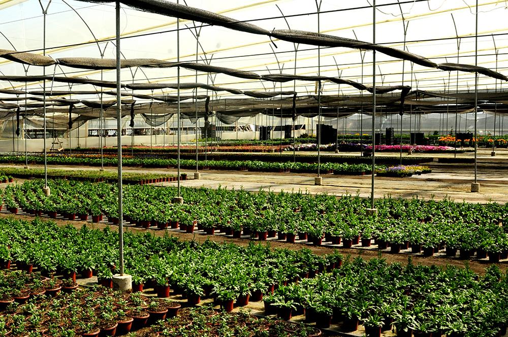 Invernadero metalico con flores en maceta de Vivero Multiplant