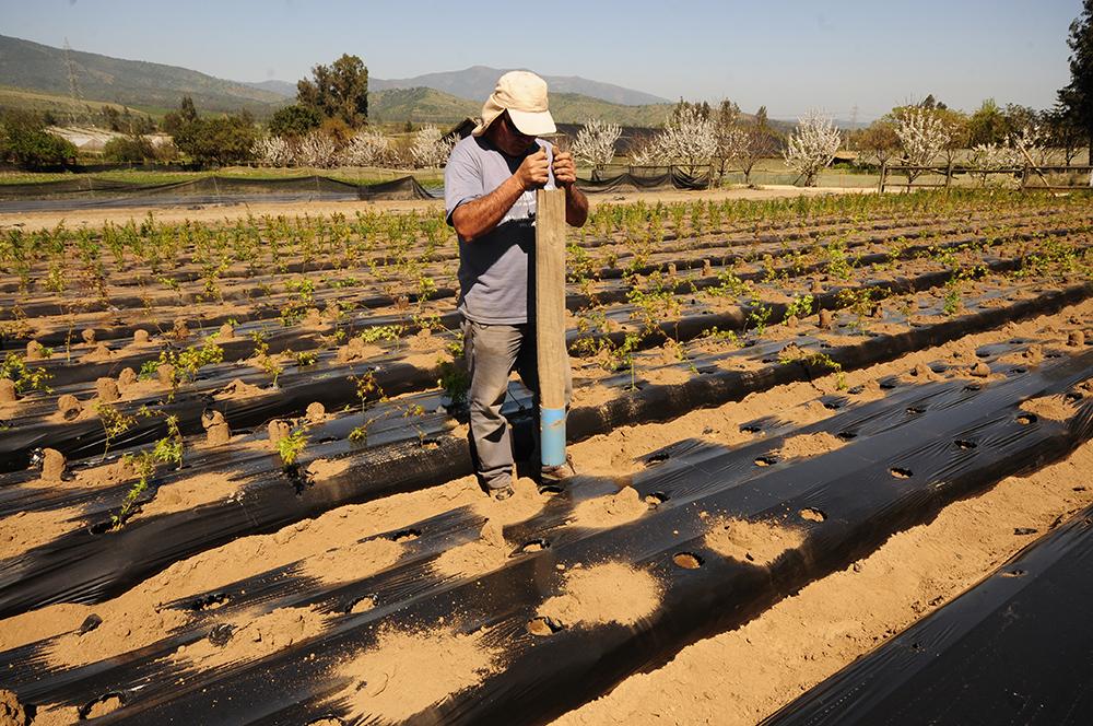 Plantaciones en tierra de Vivero Multiplant