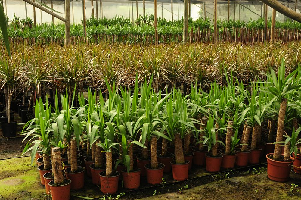Plantas de Interior importadas por Vivero Multiplant Olmue