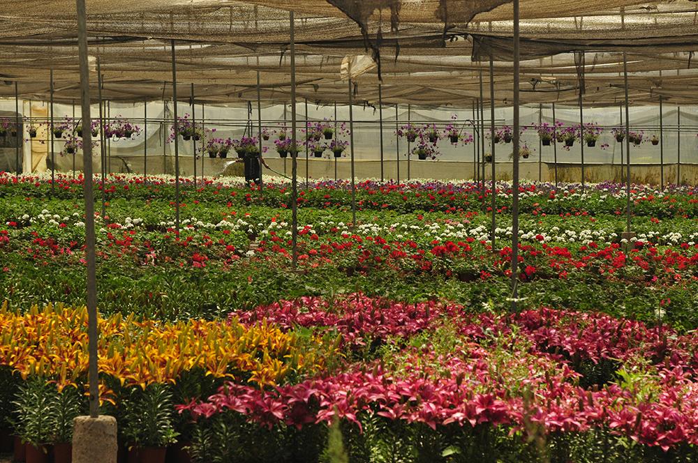 Produccion de florales de vivero Multiplant