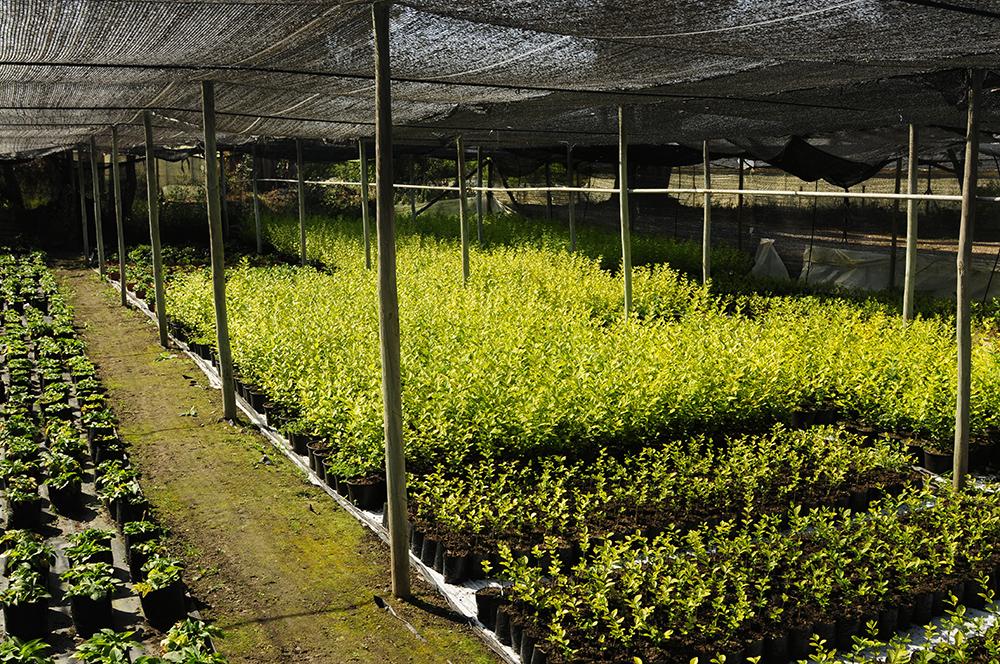 Sector de arbustos de Vivero Multiplant Olmue