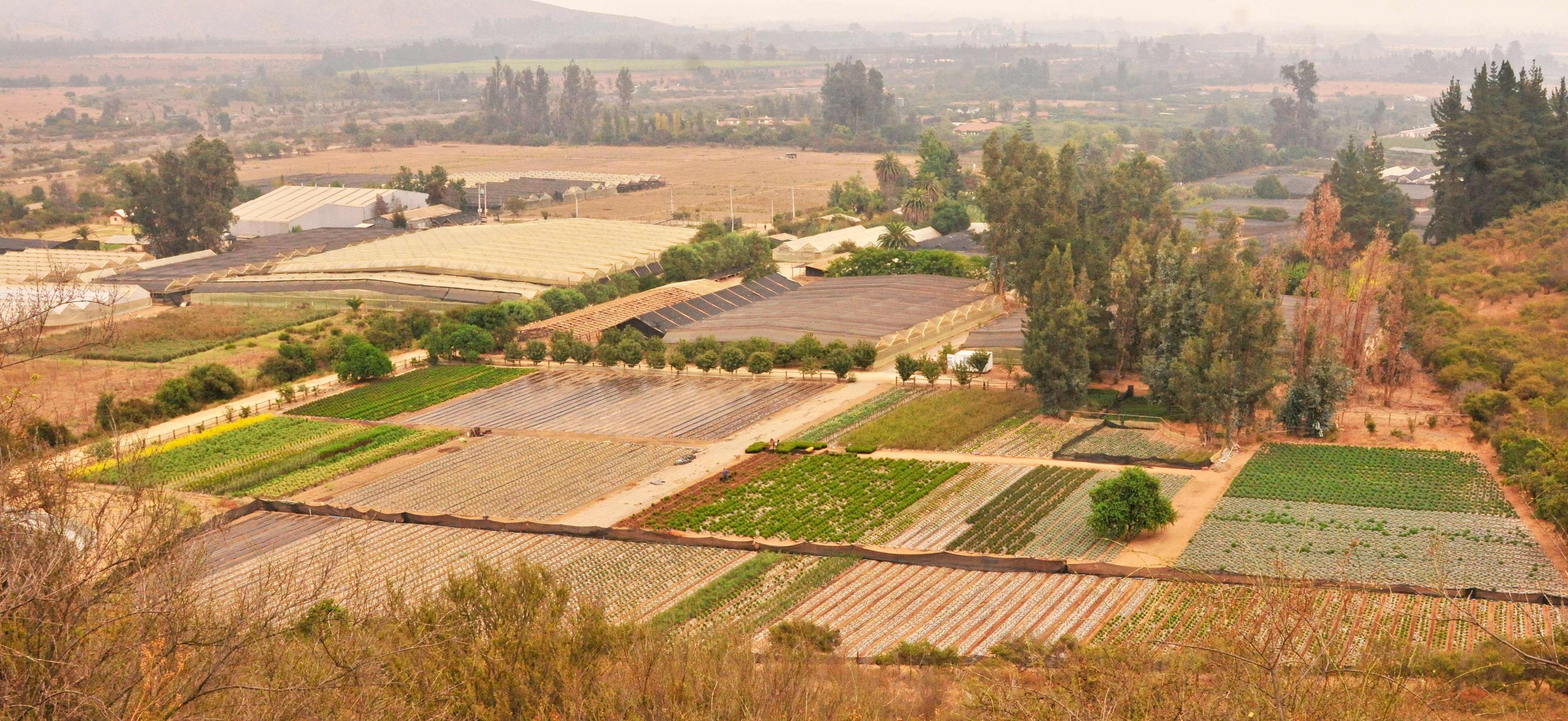 Vista de areas de produccion vivero Multiplant de Olmue