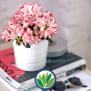 Florales Perennes
